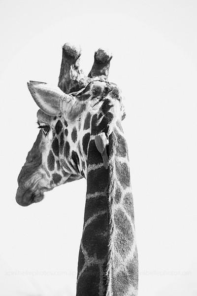 safari_989 copy.jpg