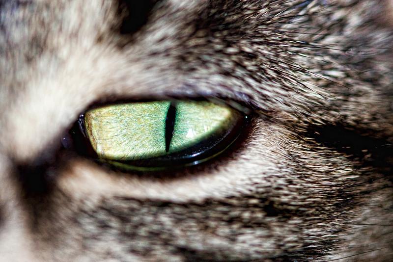 Cat's eye -1.1.2.jpg