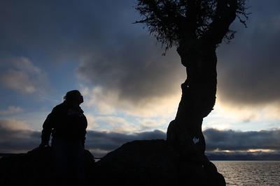 "Spirit Little Cedar Tree/Fall on Lake Superior's North Shore ""08"