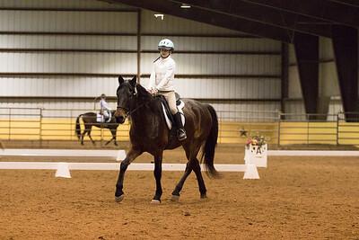 Horse 658