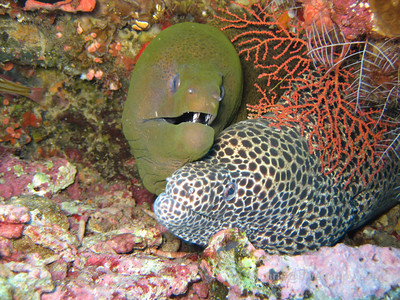 Gunung Api - Volcano Of The Sea Snakes, Banda Sea