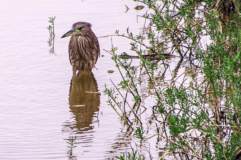 I'm not a bird expert, but I loved his green highlights
