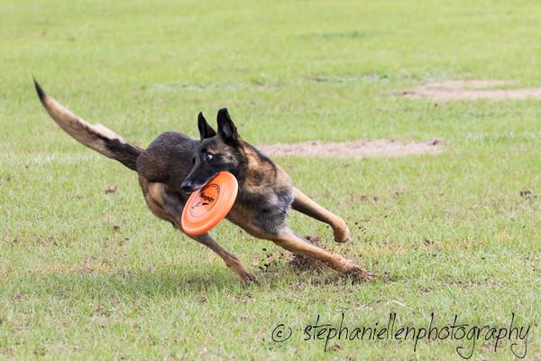 _MG_2640Up_dog_International_2016_StephaniellenPhotography.jpg