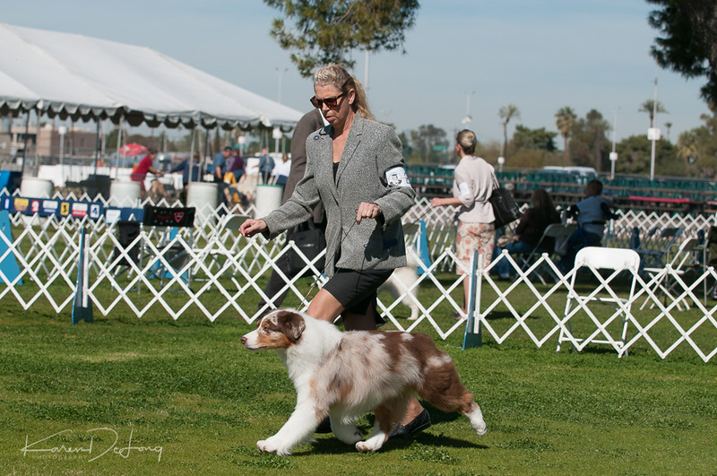 20170205_Australian Shepherds_Lost Dutchman Kennel Club-182.jpg