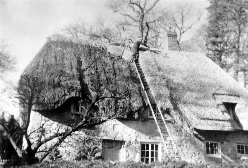 Thatching the Keepers cottage 1950s