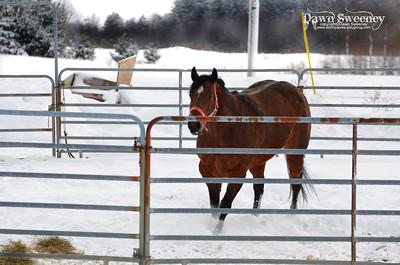 feb horses