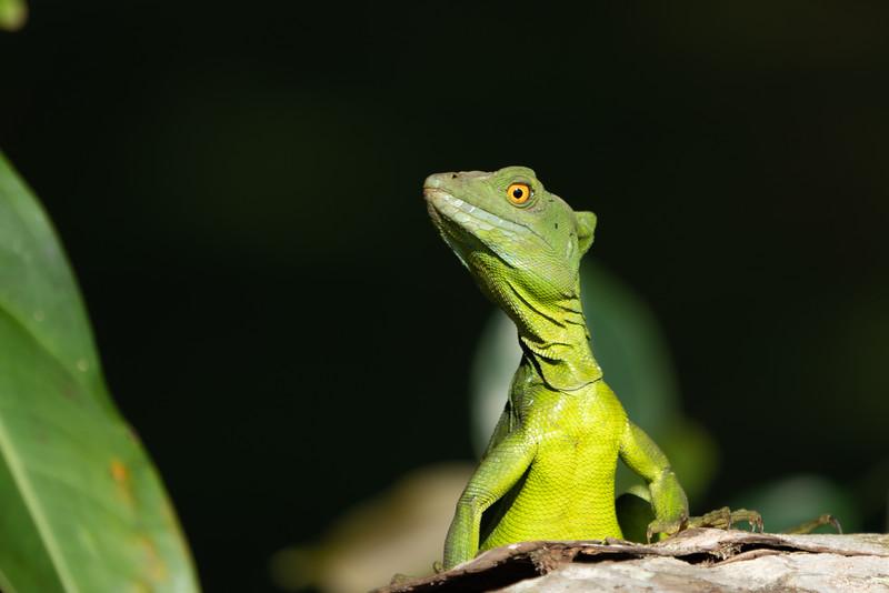 Costa Rica-1063.jpg
