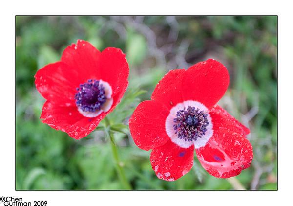 03-03-09_11-27-07.jpg