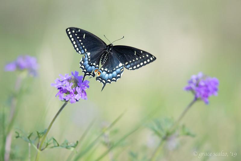 Butterfly032519.jpg