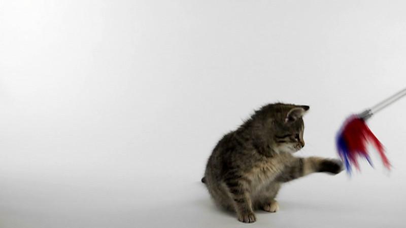 kitten_826_slow.mov