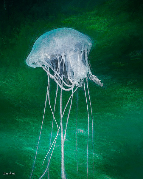 jellyfish_1130b-copy.jpg