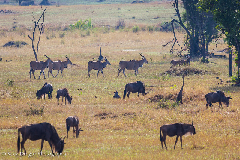 South_Serengeti-67.jpg