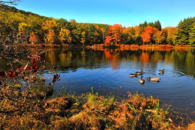 Autumn in Seven Lake web.jpg