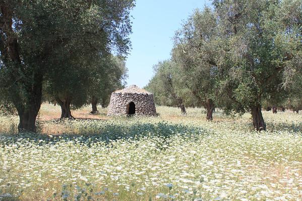 Stone Building & Flowers.JPG