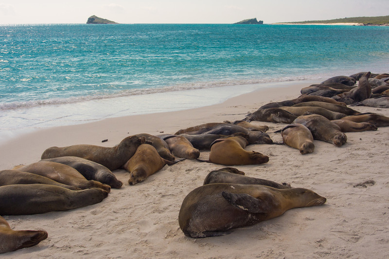 beach of sea lions.jpg