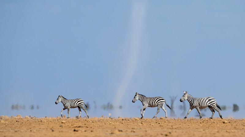 February - Amboseli