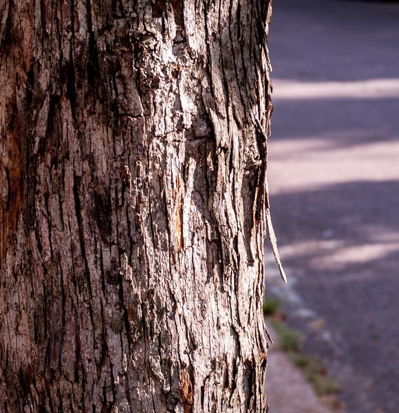 20120721-Dog Walking-3255.jpg