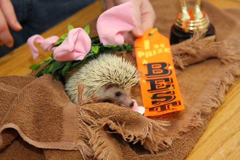 Hedgehog Fest '09 (10/10/2009)  Hedgehog Fest '09 at Norfolk County Agricultural High School - Costume Contest (10/10/2009)  Filename reference: 20091010-103438-HAH-Hedgehog_Fest_09
