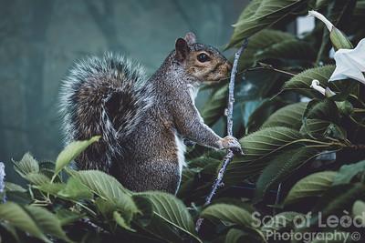 24th June Squirrel breakfast visit