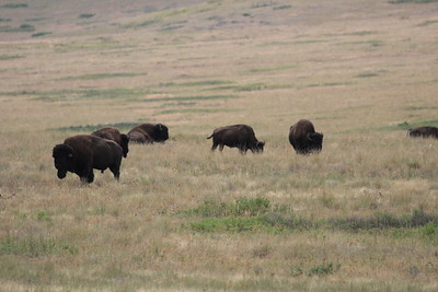24 14 Bison