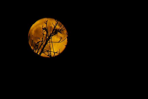 Super Moon - November 14, 2016
