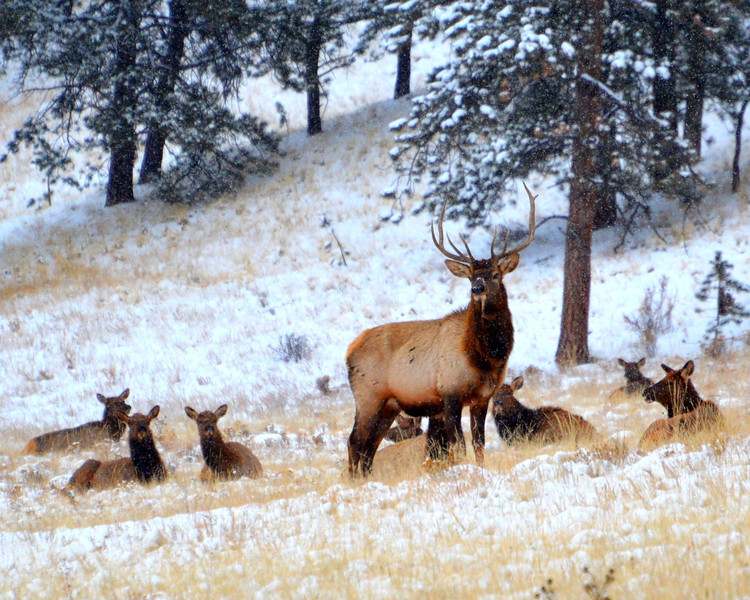 Some of the elk herd that live close by. Not the greatest shot...they always seem to stay far back in the field...wish they would come a little closer!!