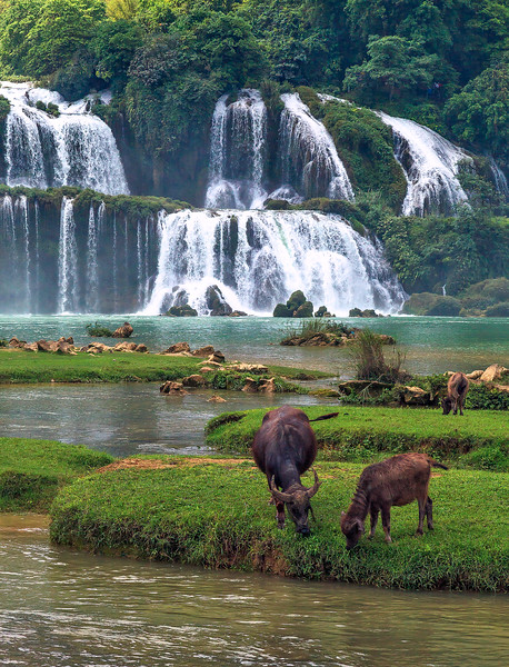 Ban Gioc Waterfall Herd IMG_7358.jpg