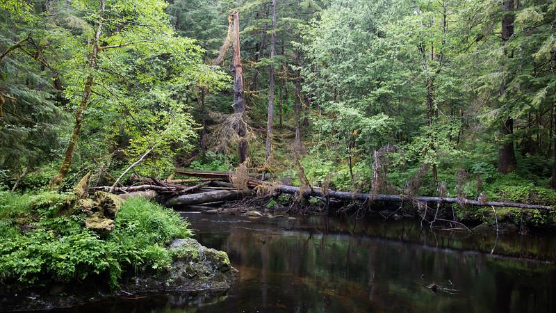 Temperate Rainforest Near Ketchikan