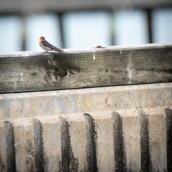 030319 birds _6.JPG