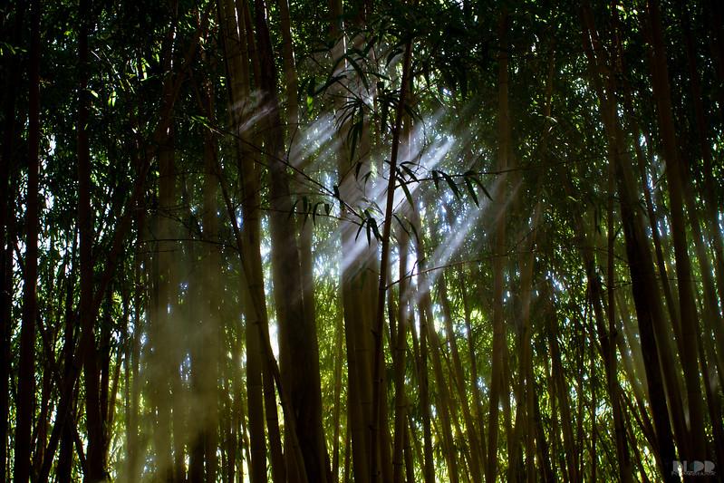 tiger trail 001.jpg