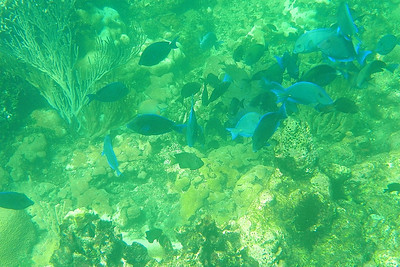 Snorkeling Images