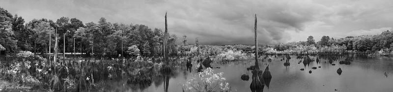 wewa swamp panoramic bxw.jpg