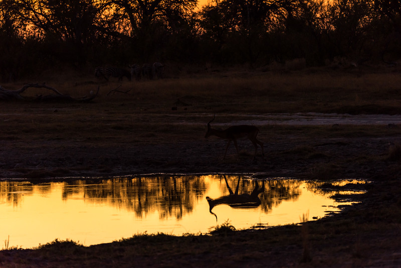 Botswana_June_2017 (213 of 6179).jpg