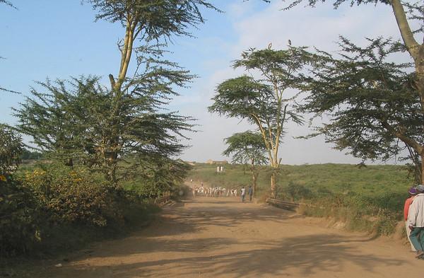 Around Nairobi