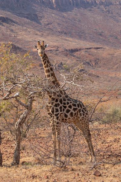 Namibia 69A6846.jpg