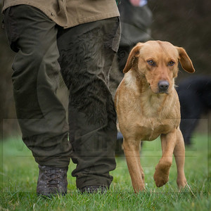 CHARITY GUNDOG EVENT FOR PROSTATE CANCER 2016