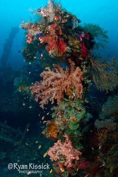 Liberty Wreck Corals