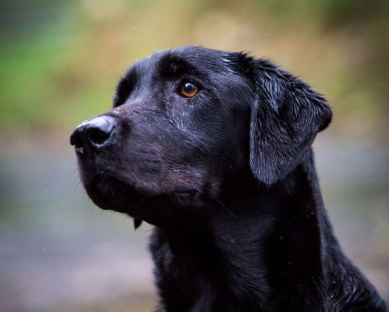 Ingrid Grayling dog training 2013