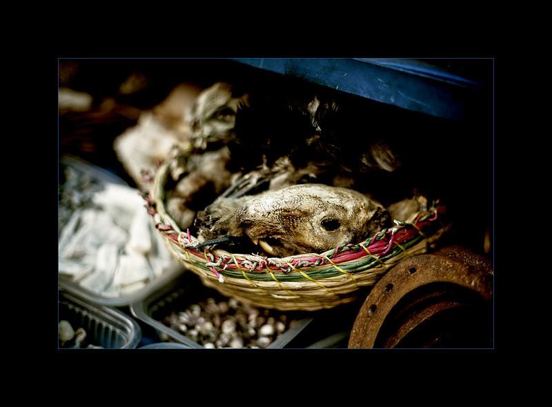 Animal skulls and bones for sale, Witches' Market, La Paz