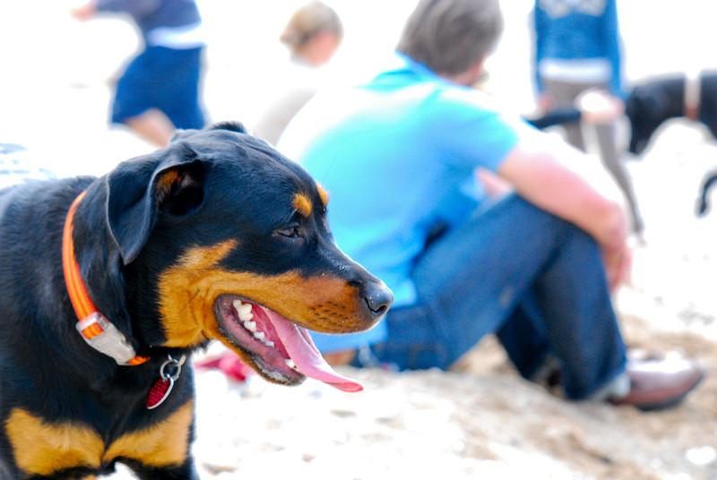 dogs_beach-033.jpg