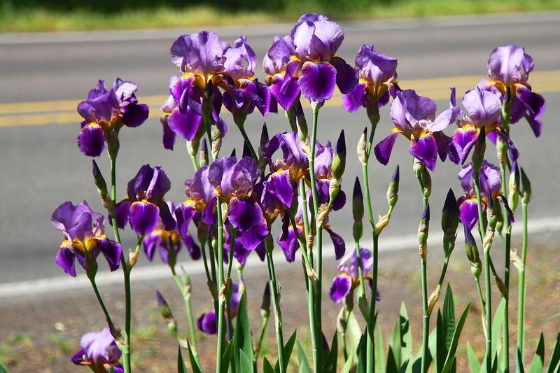 My garden May 6, 2013
