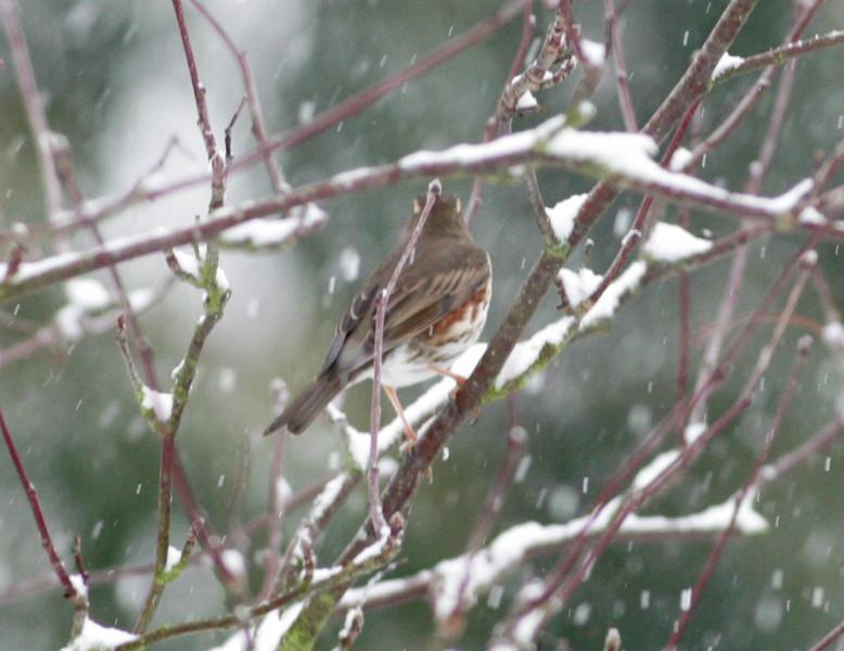 Snow 2010 110.jpg
