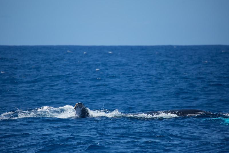 whales-leila-74.jpg