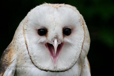 Talons! - A Bird of Prey Experience...