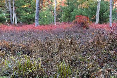 20.10.10 Fall Colors