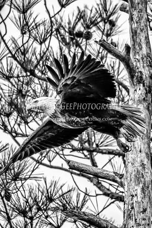 Blackwater National Wildlife Refuge - 07 Feb 2015