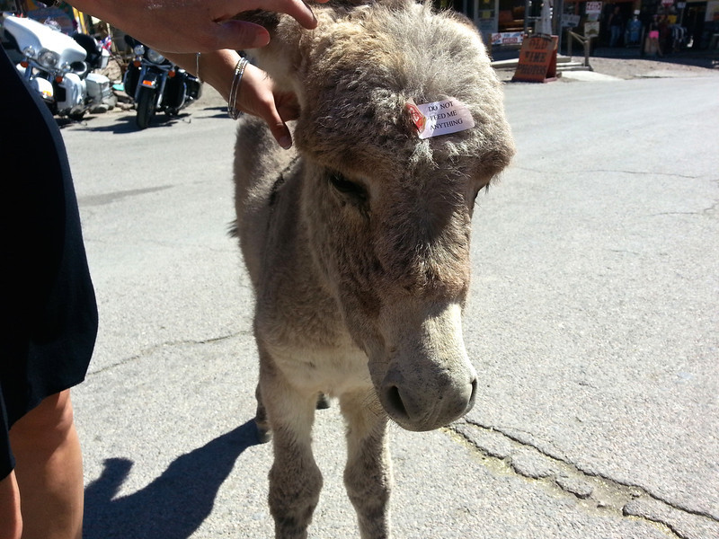 Baby burro - the sticker says you shouldn't feed it.