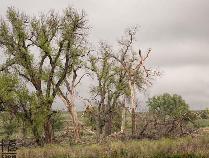 Remnants of a storm