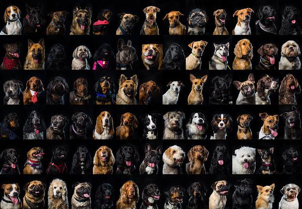 Dog Photobooth @ Brewdog