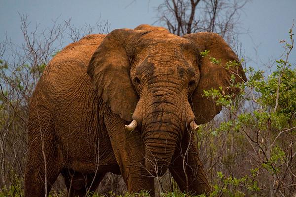 Elephants at Nungu Park in Botswana